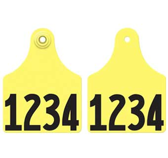 MAXI MANAGEMENT NUMBERED FRONT & BACK GXF2R
