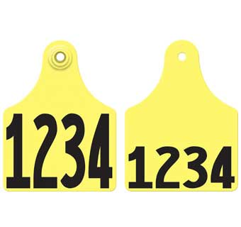 MAXI MANAGEMENT NUMBER FRONT & BACK GXF1R