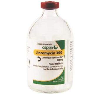 LINCOMYCIN 300 INJECTABLE 100ML 1/PKG