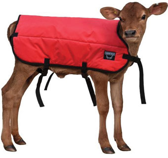 DOUBLE INSULATION CALF BLANKET RED S 26 IN