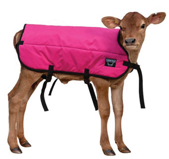 DOUBLE INSULATION CALF BLANKET PINK S 26 IN